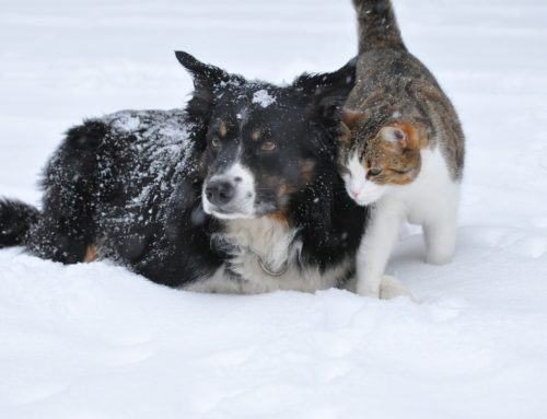 Protect Your Pet From Winter Woes from The Beacon